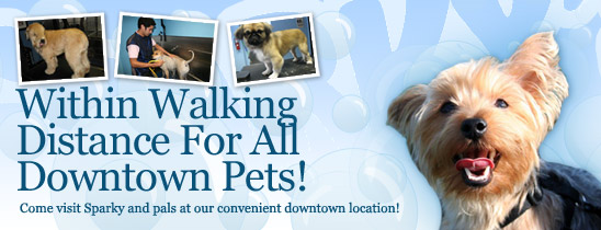 Downtown orlando pet salon sparkys pet salon downtowns finest pet groomers solutioingenieria Choice Image